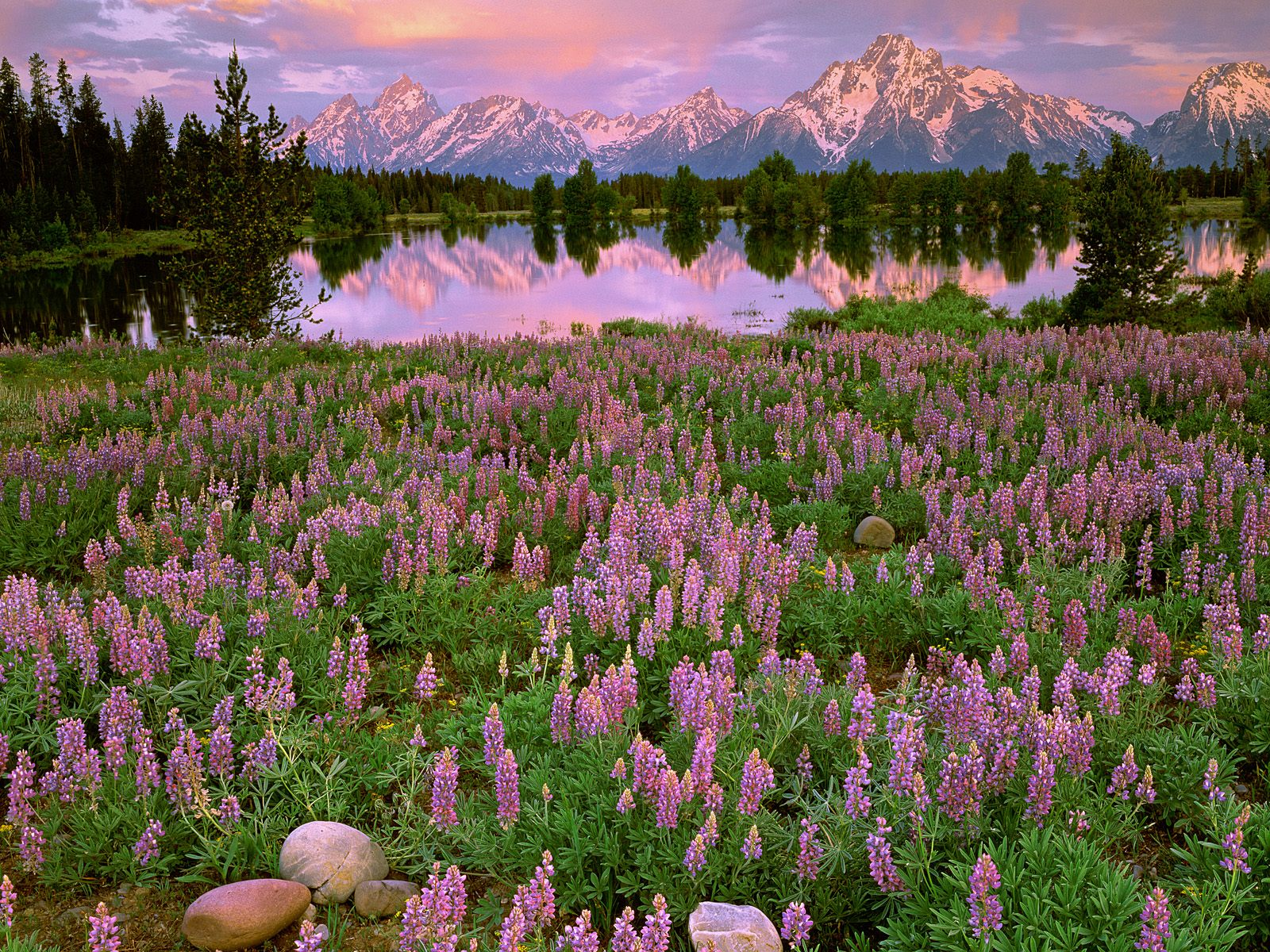 Sunrise Light Along Pilgrim Creek, Grand Teton National Park, Wyoming