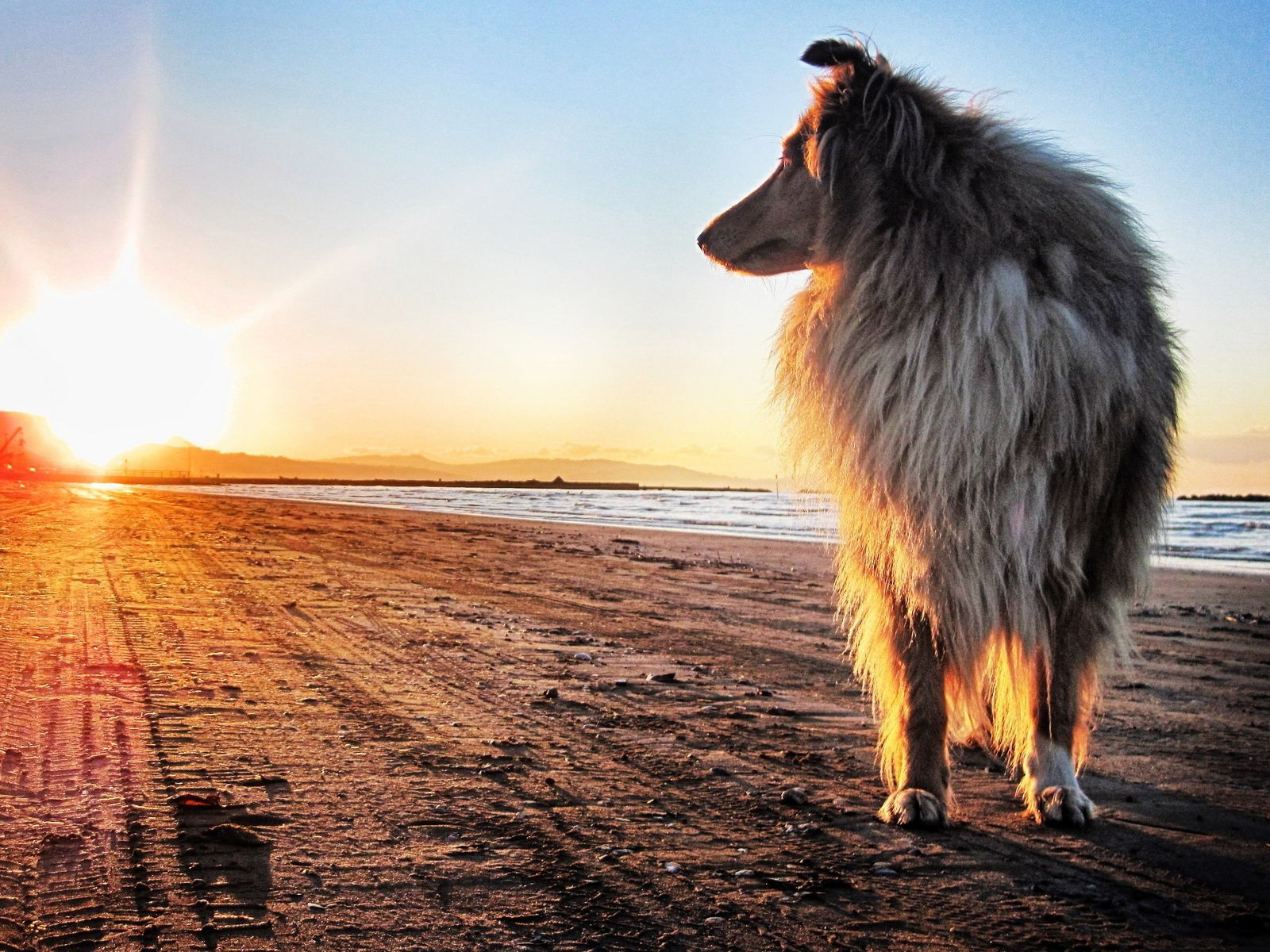 Dog & Sunset