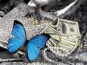 Morpho Aurora - Blue & Black Butterfly